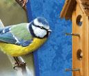 Kerti madáreleségek