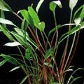 Információk a növény rendeléssel kapcsolatban