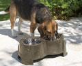 Savic Ergo-feeder - ergonomikus etető, itató tál kutyáknak